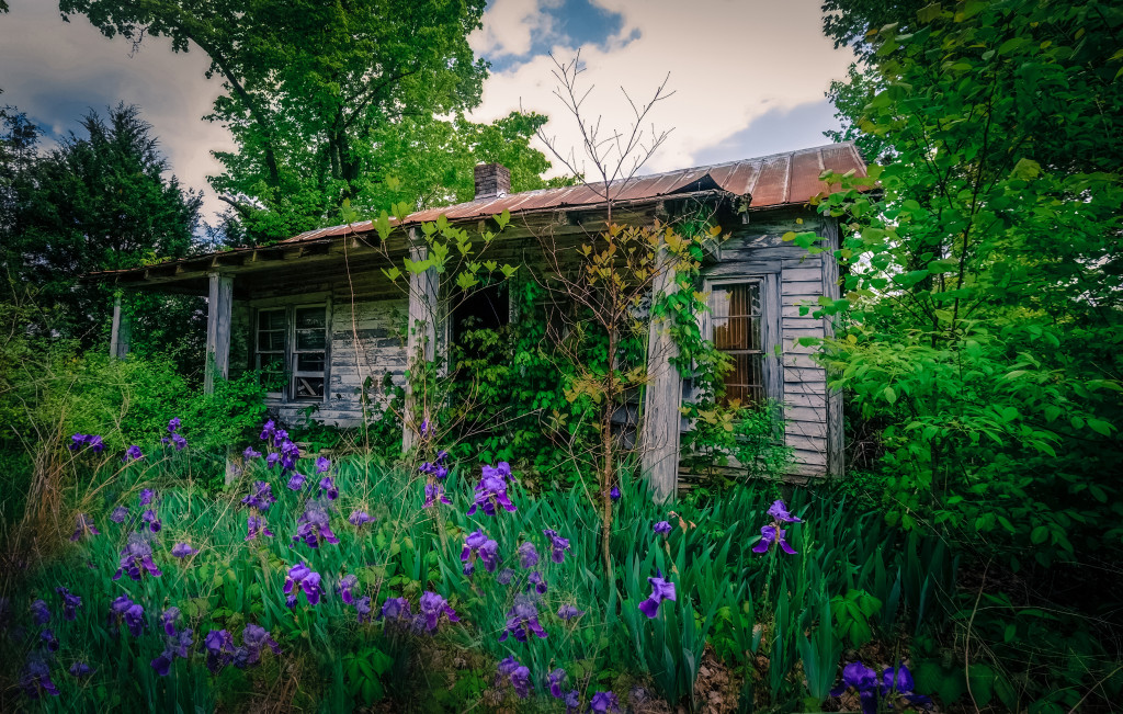 Old Houe with Irises4